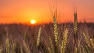 Separar el grano de la paja